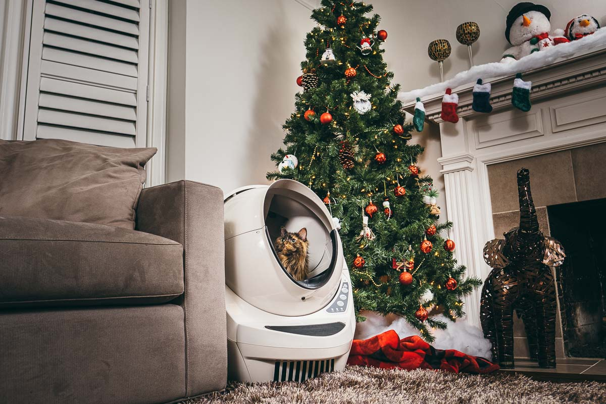 Business photography of self-cleaning litter box for cats